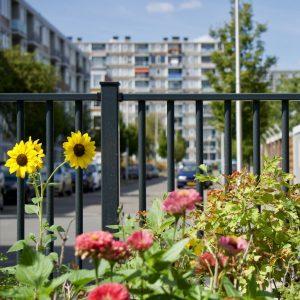 Afbeelding bij Rapportage wijkraadpleging Wonen in Overvecht
